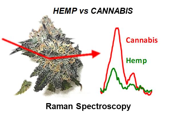 hemp_cannabis
