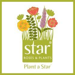 star-roses-placeholder_0